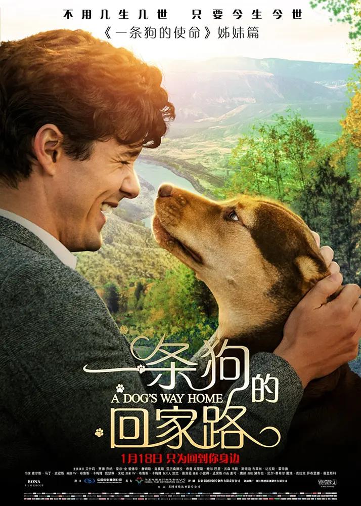 2019年 一条狗的回家路 [一条狗的使命姊妹篇]